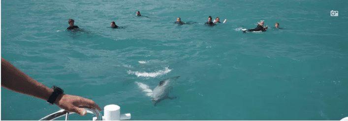 Dolphins around christchurch